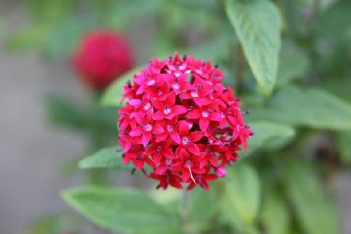 Plantas que dão flores o ano todo 2
