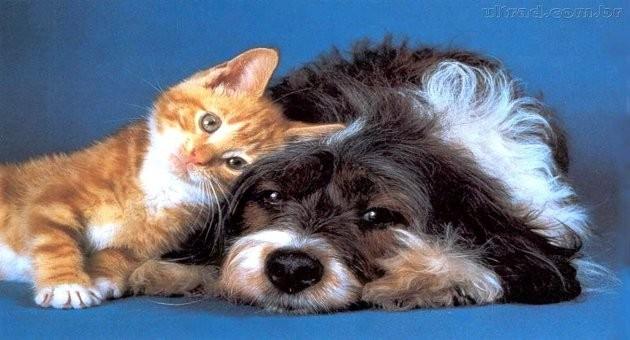 Descubra o signo do seu animal de estimação