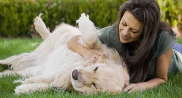 Falta de apetite em cães: o que fazer
