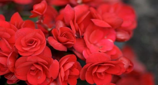 Flores indicadas para outono-inverno