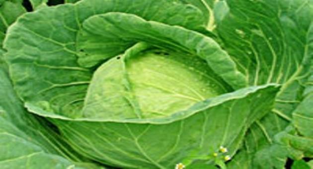 Legumes que ajudam a emagrecer