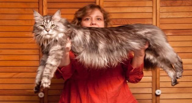 Animais que estão no Guinness Book