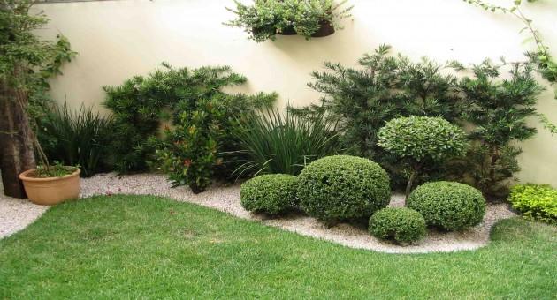 Plantas decorativas para interiores for Plantas decorativas